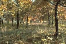 Illinois naturaleza