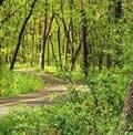 illinois bosque