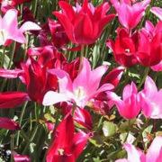 Chicago Flores y Naturaleza
