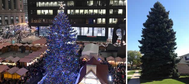 arbol-navidad-chicago-2013