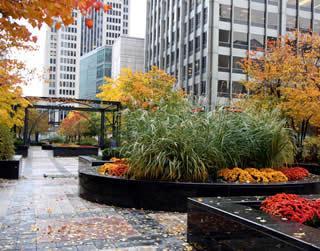 Como es Chicago en otoño