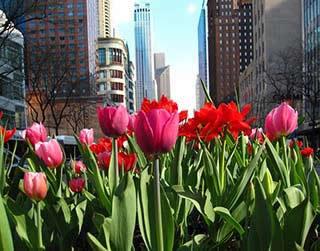 visitar Chicago en primavera