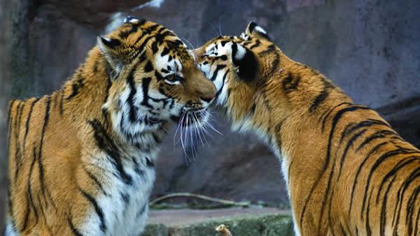 Zoológico de Lincoln Park Zoo