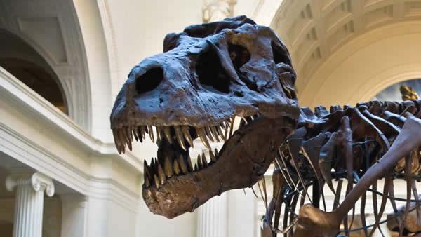 Museo de Ciencias Naturales de Chicago