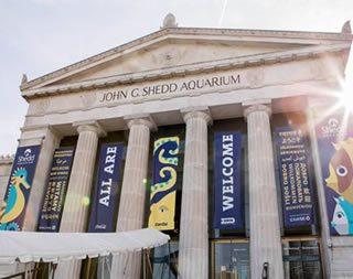 Acuario de Chicago guia de museos