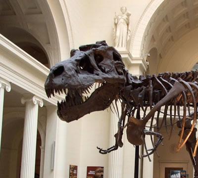 Museos Gratis: Museo de Ciencias Naturales Field